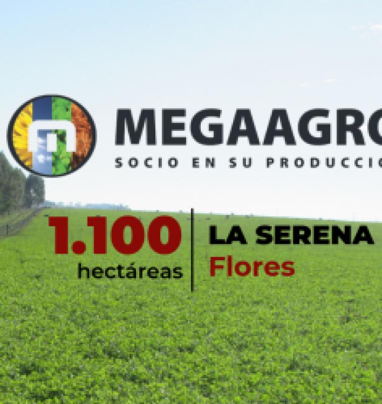 Excelente Oportunidad de Arrendamiento de Campo por Licitación – La Serena