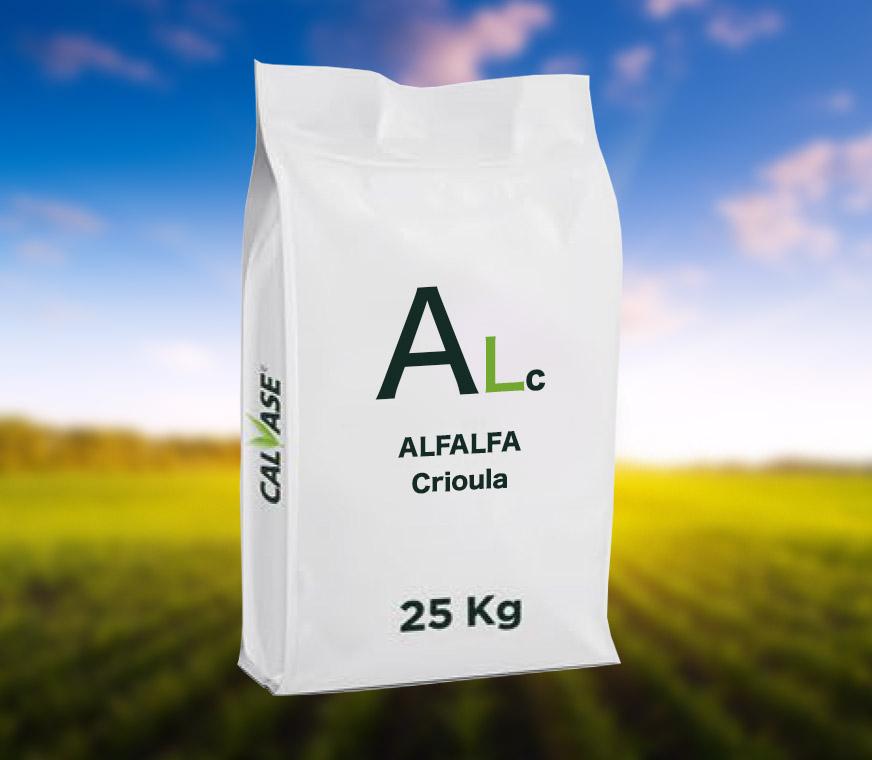ALFALFA-Crioula.jpg