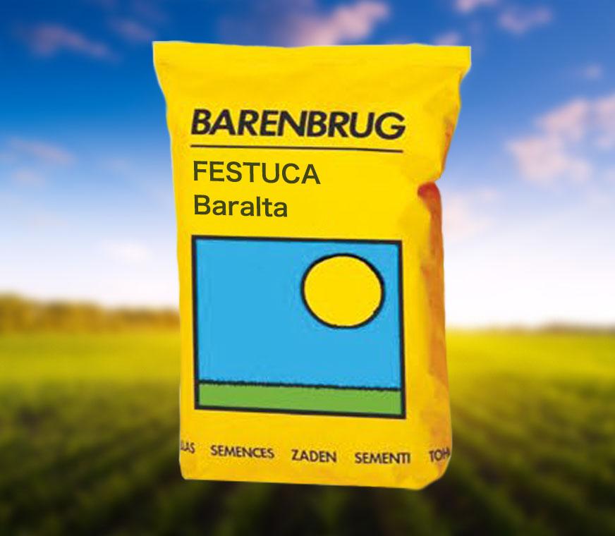 FESTUCA-Baralta.jpg