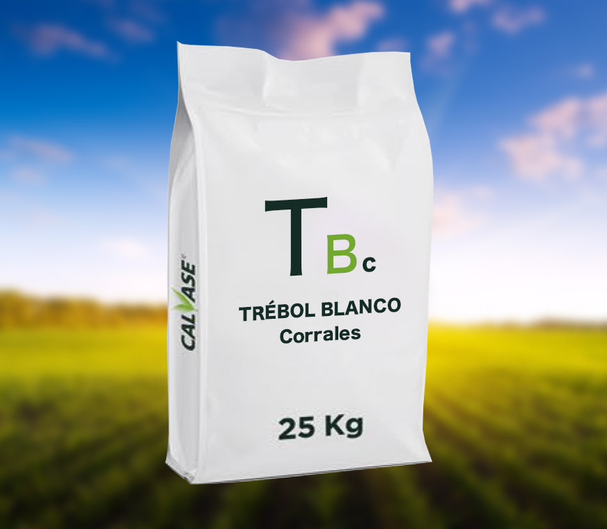 Trebol-Blanco-Corrales.jpg