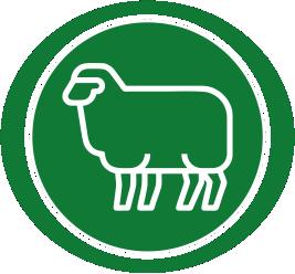 lanas-y-ovinos.png