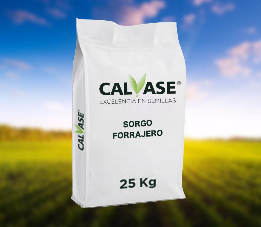 CALVASE_Sorgo_Forrajero.jpg