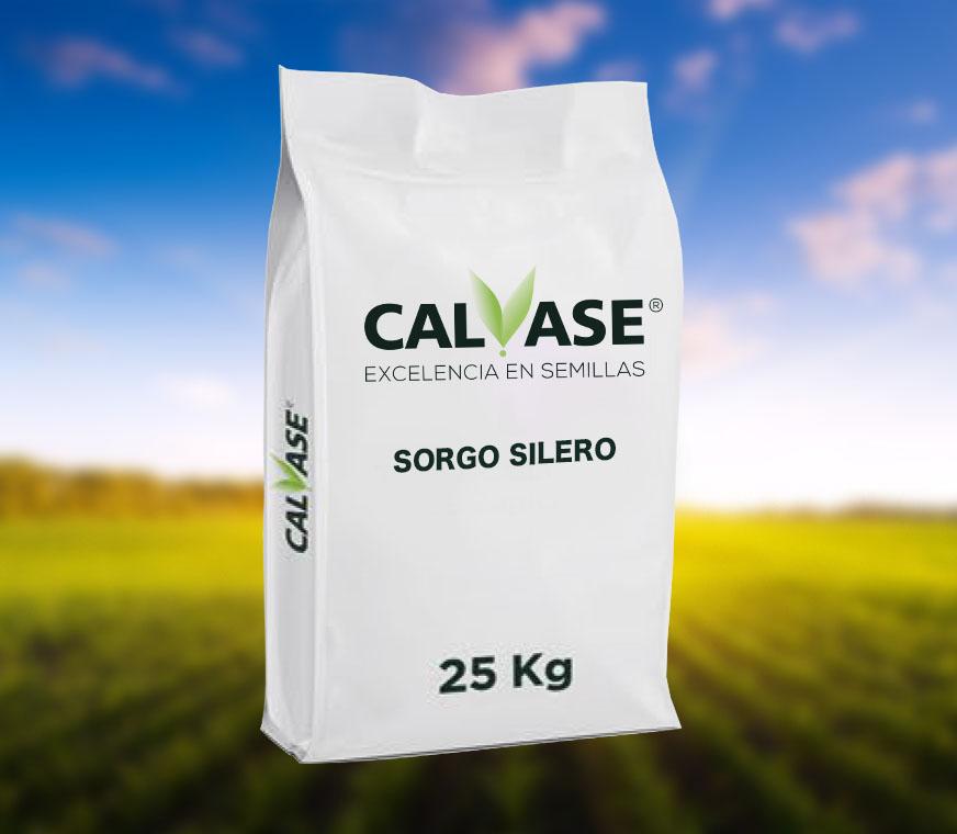 CALVASE_Sorgo_Silero.jpg
