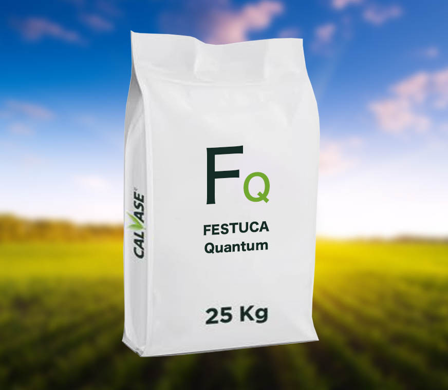 FESTUCA-Quantum.jpg