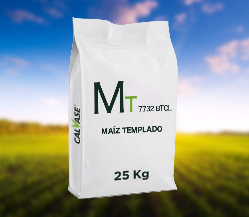 Maiz-Templado-7732-BT-CL.jpg