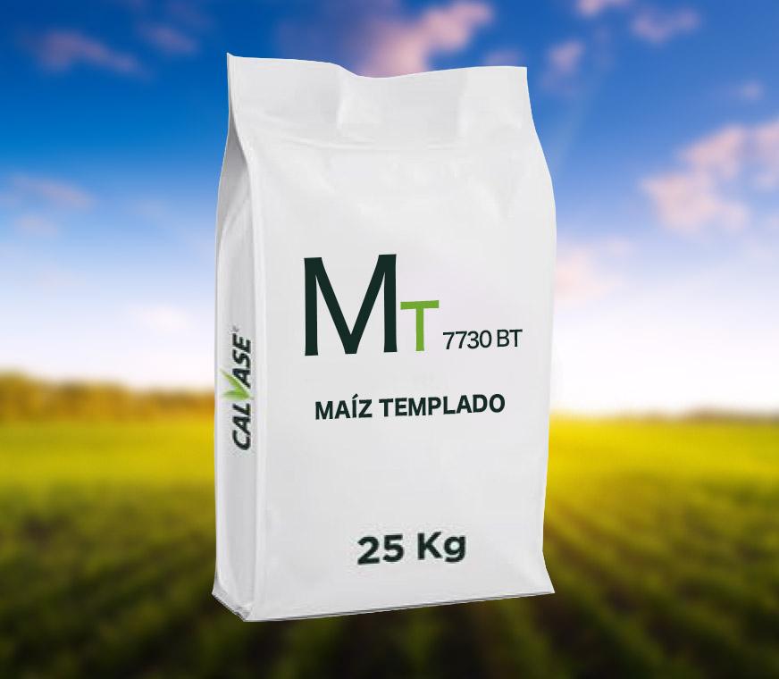 Maiz-Templado-ARG-7730-BT.jpg