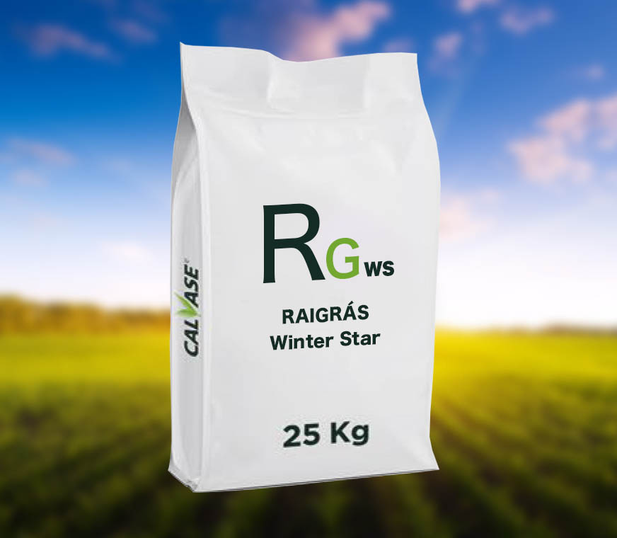 Raigras-Winter-Star.jpg