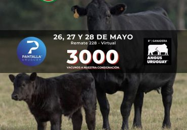 Destacada liquidación de Eastlands SA en Pantalla Uruguay