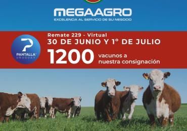 Pantalla Uruguay 229