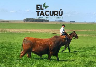 Subasta Virtual El Tacurú
