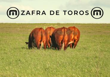 Beneficios Zafra de Toros